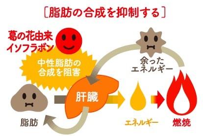 シボヘールの脂肪合成抑制
