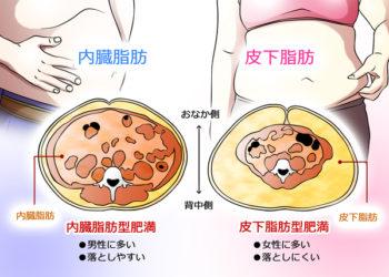 内臓脂肪 皮下脂肪