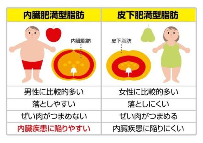 内臓脂肪と皮下脂肪の違いについて解説した画像
