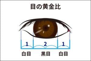 目の黄金比率のイラスト