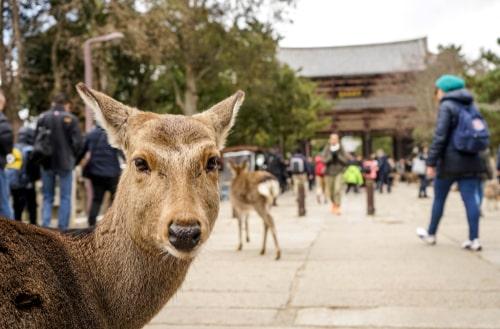 奈良 奈良公園 鹿