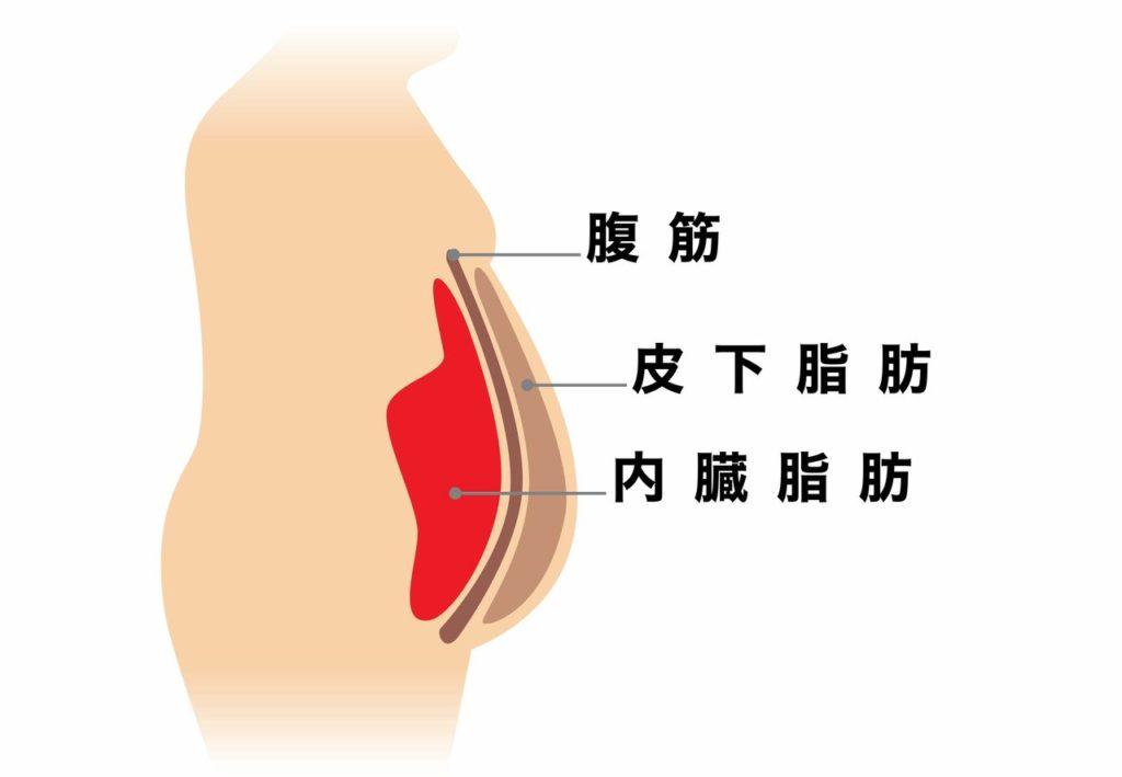 方法 内臓 脂肪 落とす