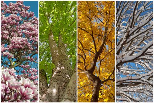 四季 季節