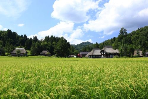 新潟 田園風景