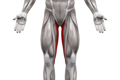 内転筋太ももの内側の筋肉のイラスト
